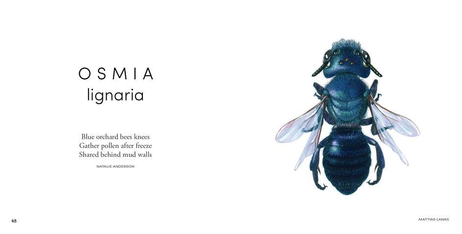 BeesOfCalifornia web2.jpg