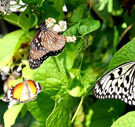1200-butterfly-farm.jpg