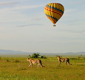 balloon safari.jpg