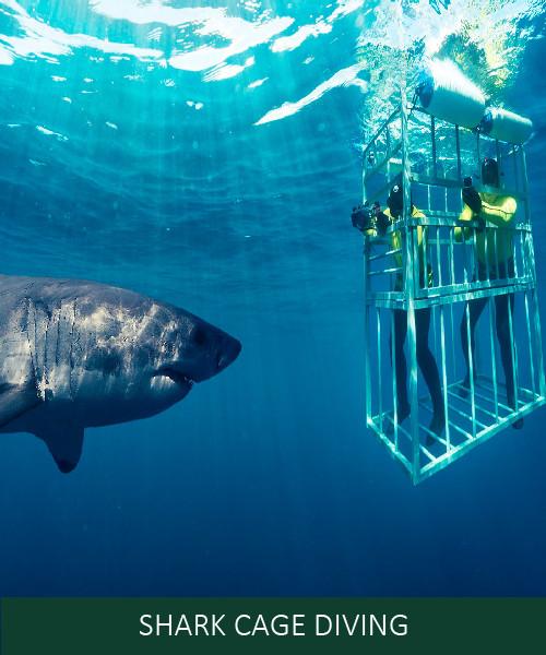 Shark Cage.jpg