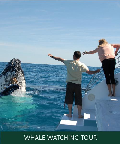 Whale Tour.jpg