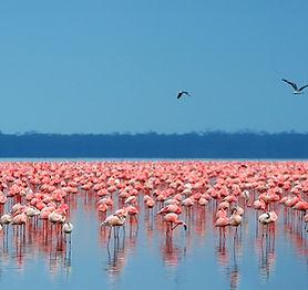 Lake-Nakuru.jpg