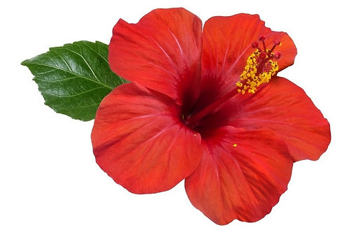 Hibiscus flowers (not sorrel)