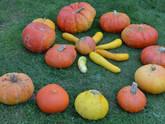 Velouté de potiron à l'orange