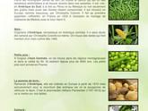 De quels pays sont originaires nos légumes ?
