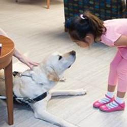Wayne Heidle's Guide Dog Poncho