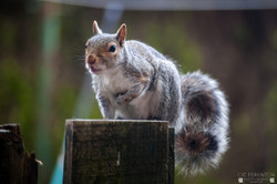 Squirrell 22