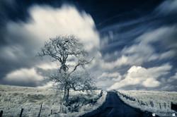 Takmadoon Tree 2