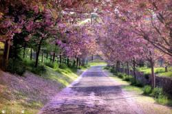 Under Blossom