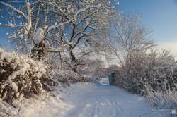 Topline Narnia 2