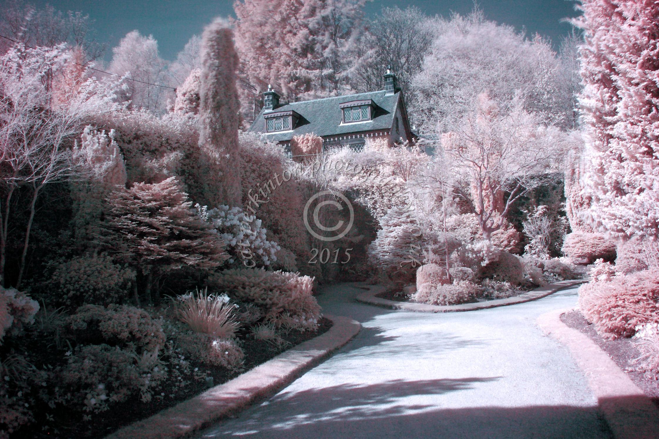 Walled Gardens Candyfloss 2