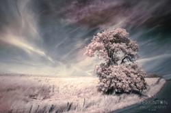 Takmadoon Tree1