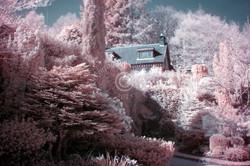 Walled Gardens Candyfloss