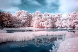 Curling Pond froth