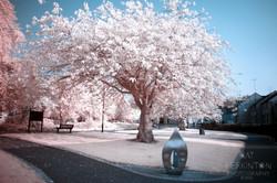 Burngreen Tree of Souls