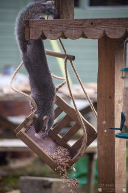 Squirrell 18