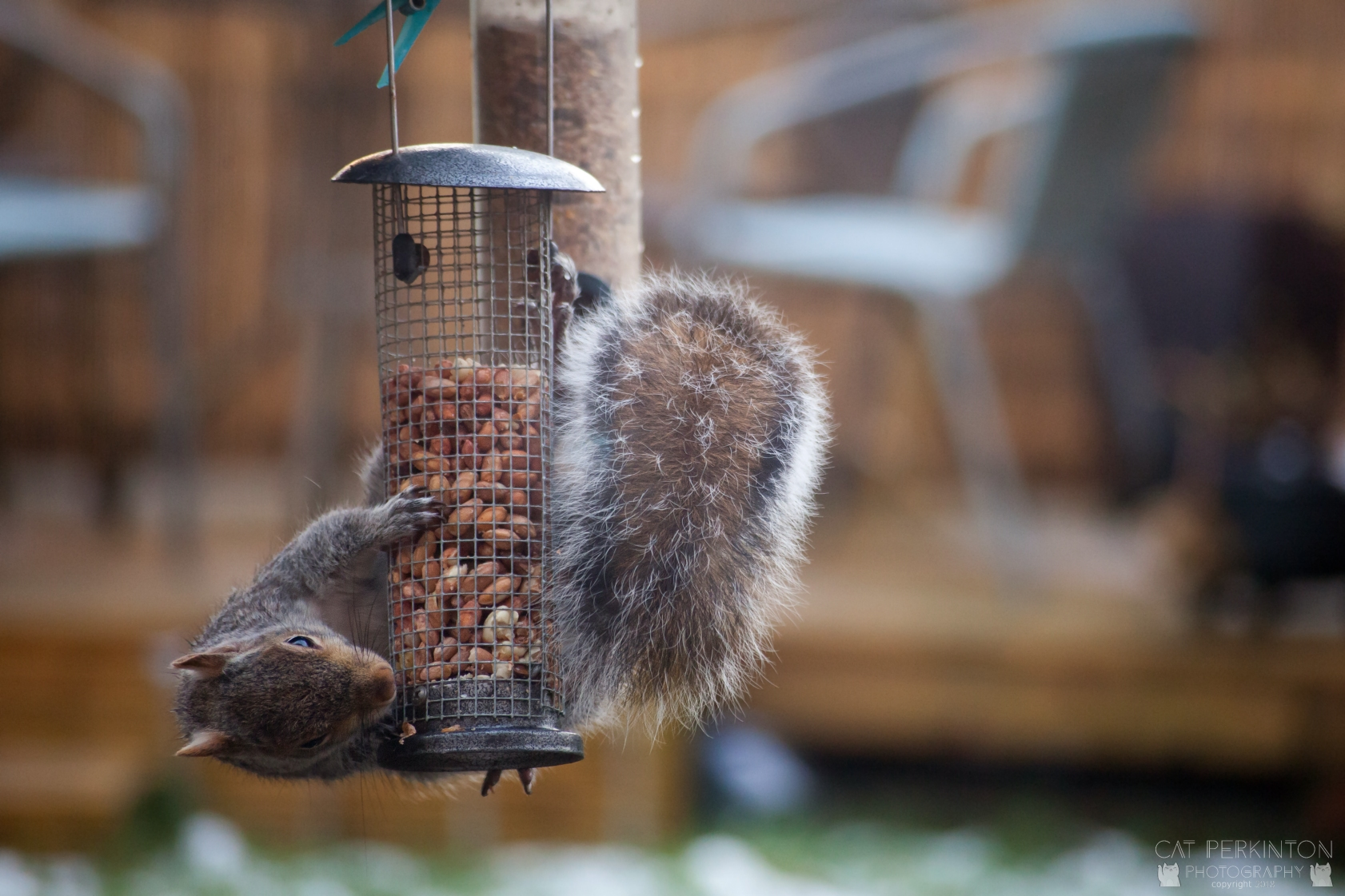 Squirrell 19