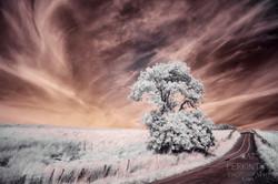 Takmadoon Tree 3