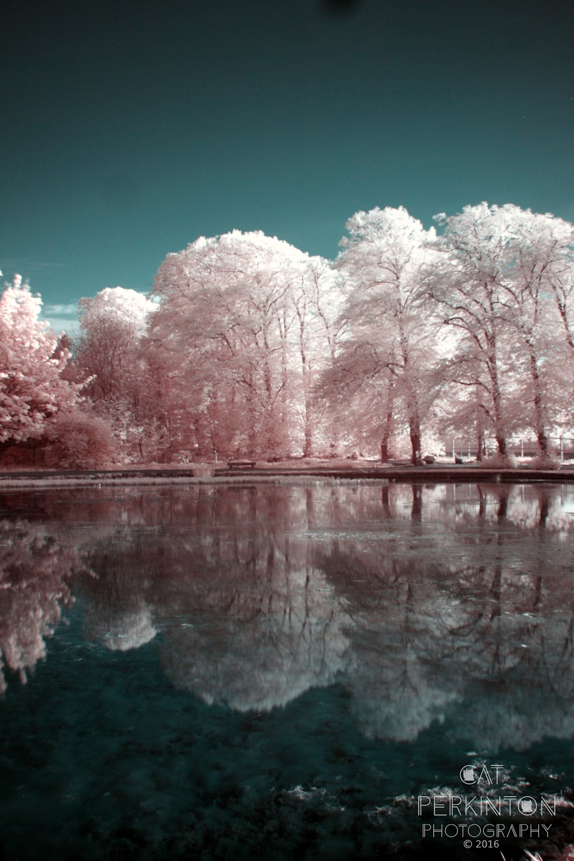 Curling Pond Glow