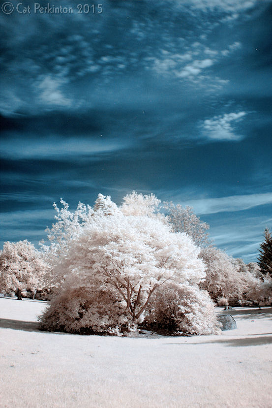 Serendipity Blue