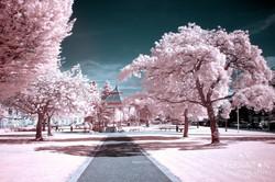 Candyfloss world Burngreen