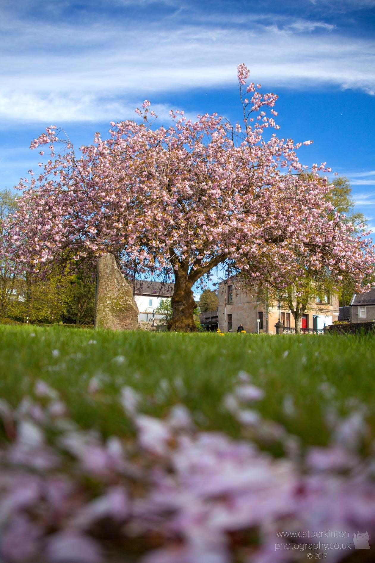 Blossom Carpet