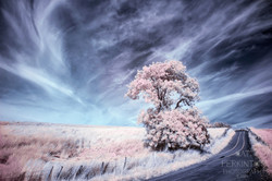 Takmadoon Tree 3B
