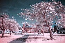 Bandstand Froth 2
