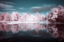 Candyfloss reflections