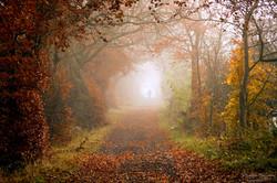 Appearance Under Autumn