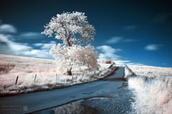 The Tak Tree (IR)