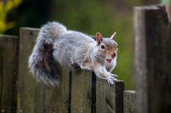 Squirrell 23
