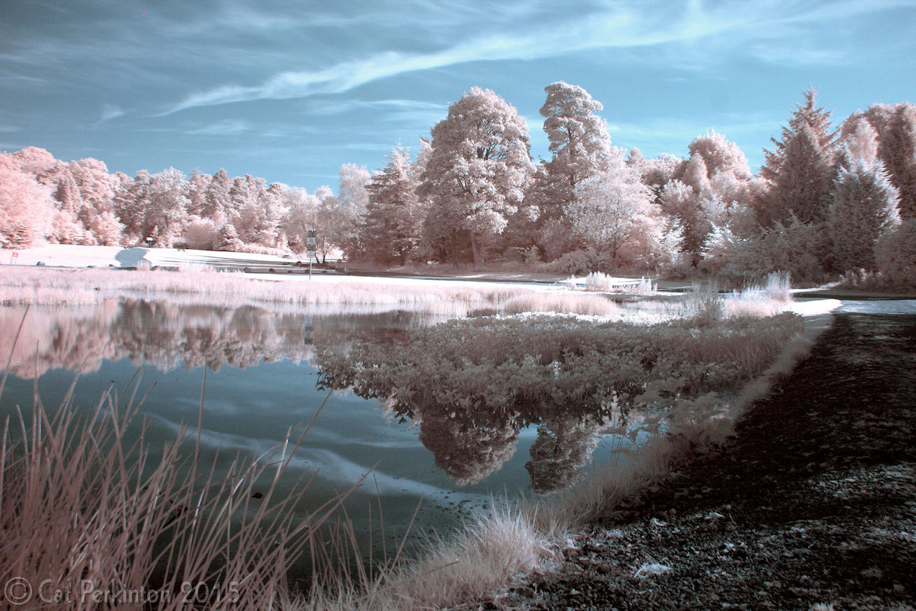 Curling Pond reflected