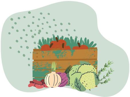 Natep Cultiva #1 - Agroecologia: uma ferramenta de luta popular
