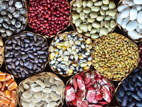 Natep Cultiva #6 - Sementes Crioulas, um de nossos maiores bens