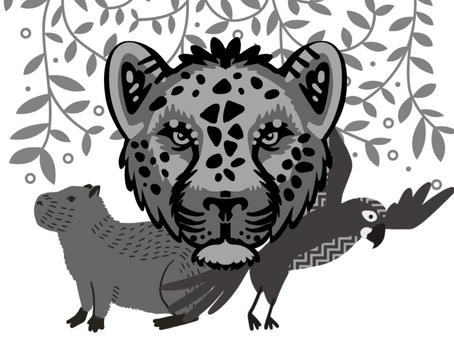 Pantanal: bioma e patrimônio em xeque