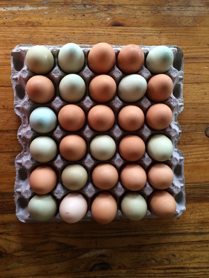 Flat Iron Farm Fresh Eggs