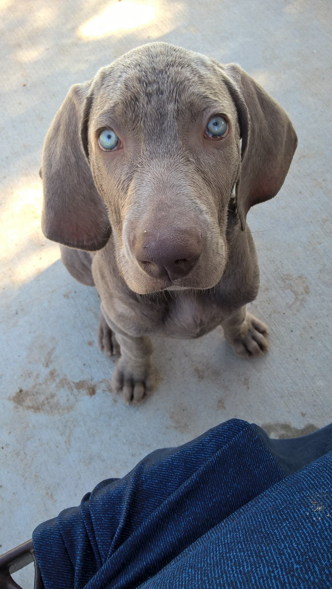 Look at those blue eyes!
