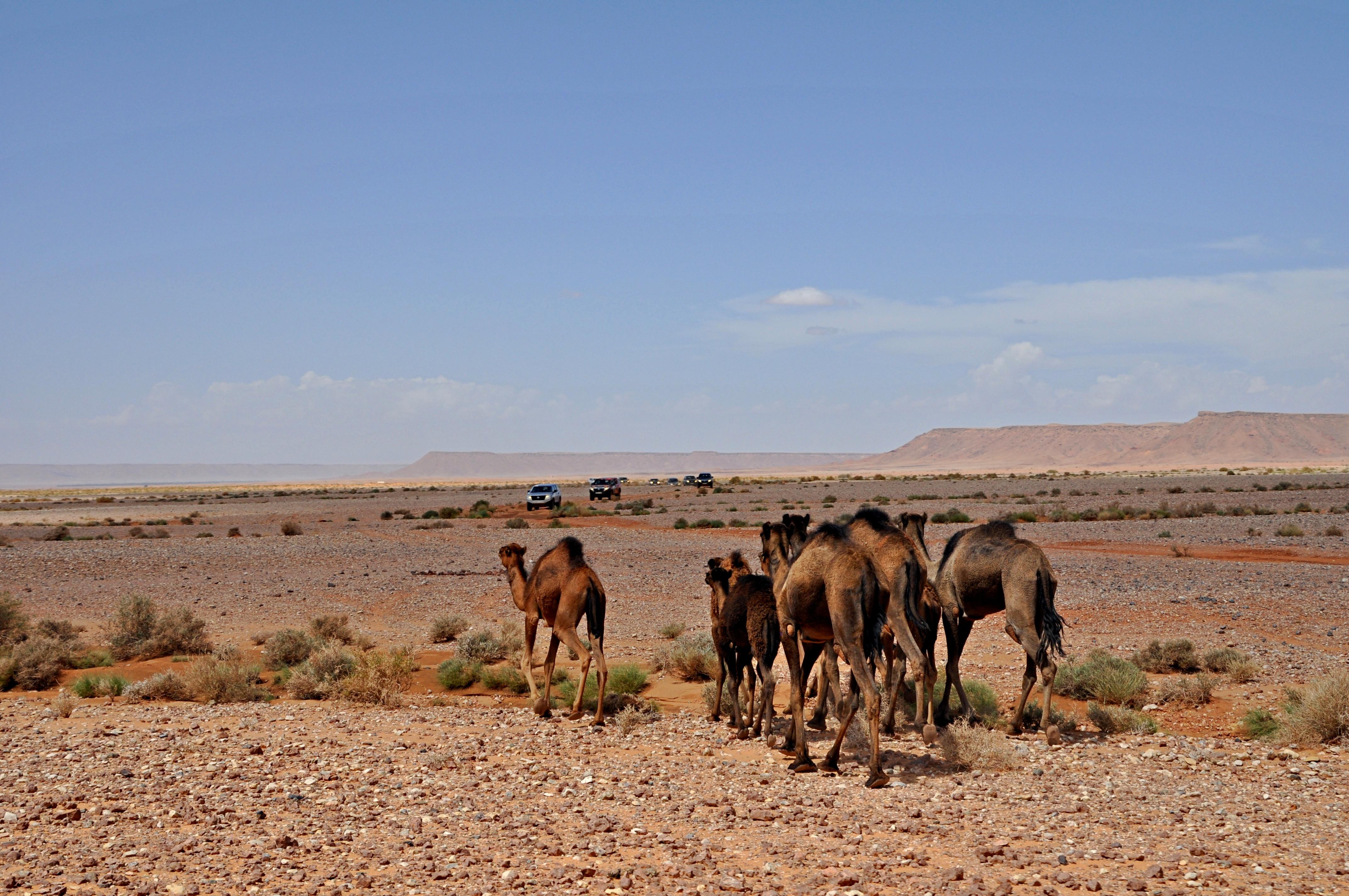 Rutas del Dakar