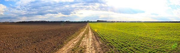 pathway-middle-field-that-separates-gree