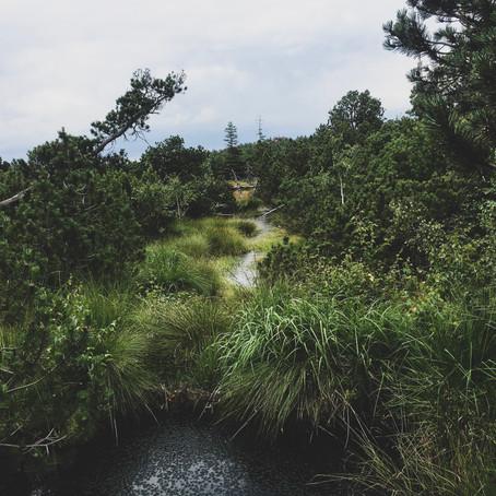 Moorspaziergang - Deutschland entdecken