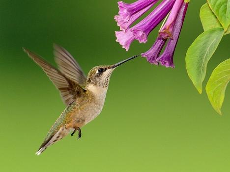 """Stage de dessin - peinture - céramique, """"La légende du colibri"""""""