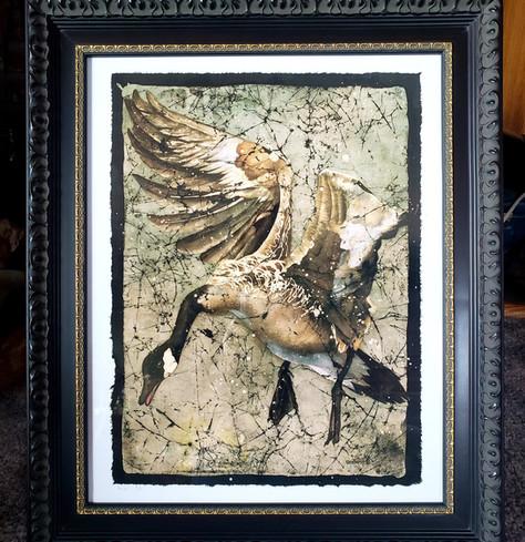 Canada Goose Framed Print