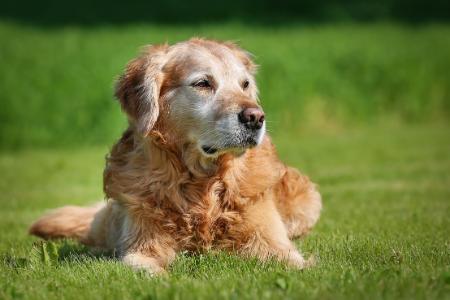 Doggie Dementia