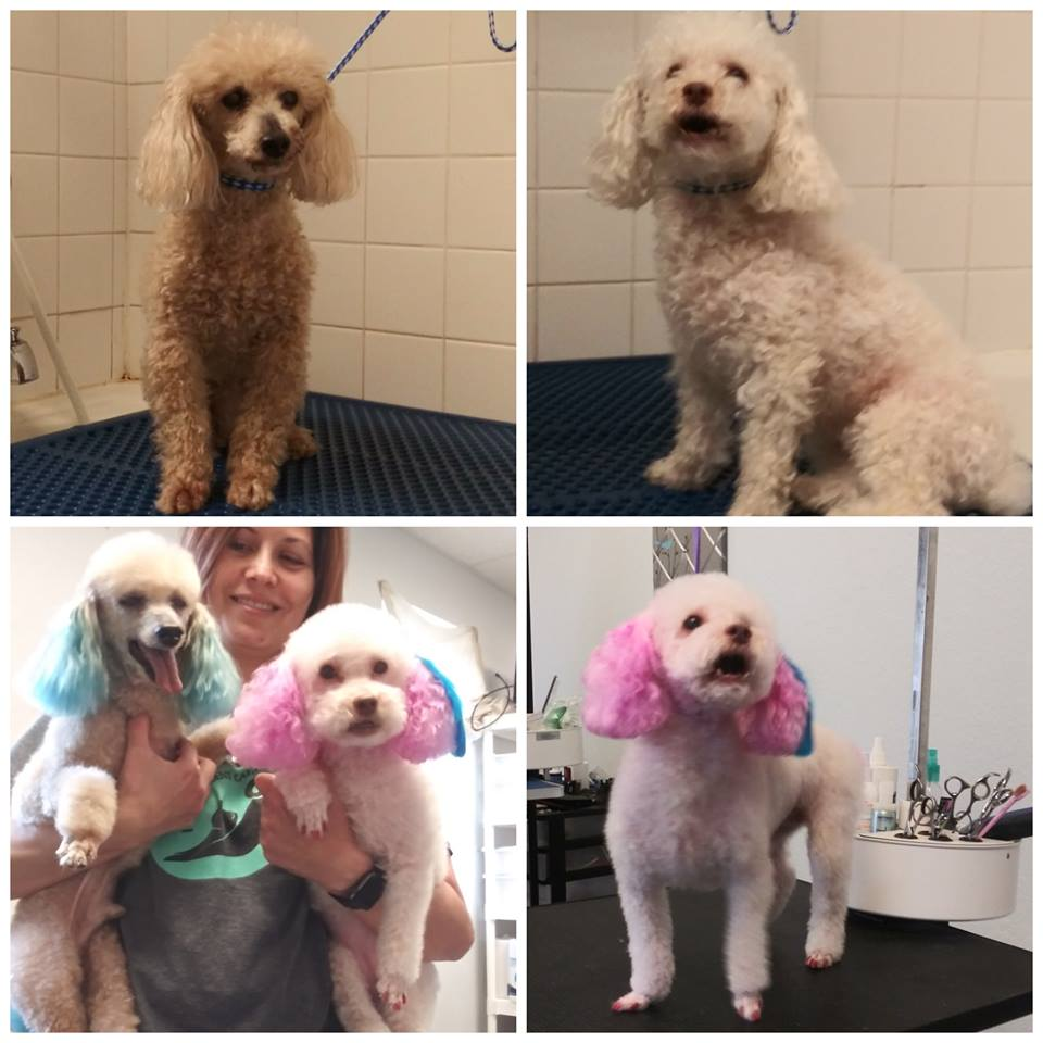 Charlie and Dixie Grooming at Orchid Springs Animal Hospital