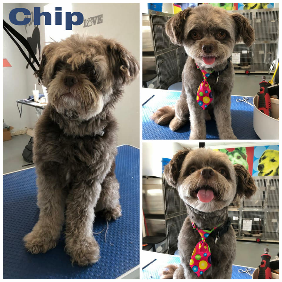 Chip Grooming at Orchid Springs Animal Hospital
