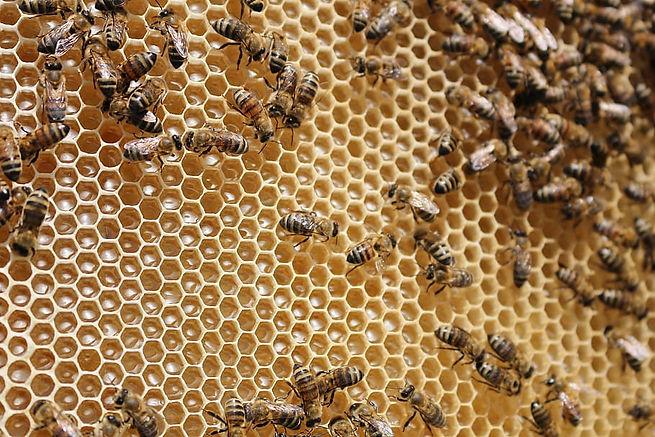 beehive-bees-.jpg
