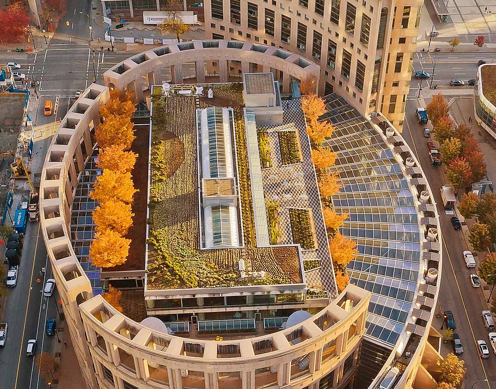 Vancouver Library green roof drip irrigation system