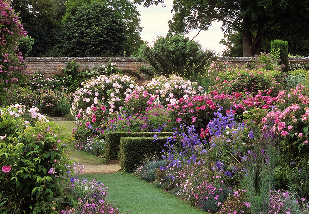 Rose garden at Mottisfont Abbey