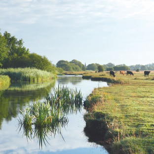 Stockbridge Water Meadows